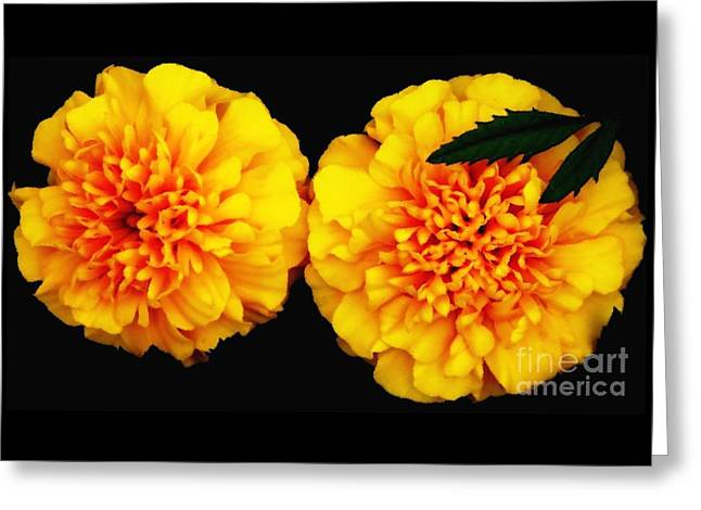 Greeting Card featuring the photograph Marigolds With Oil Painting Effect by Rose Santuci-Sofranko