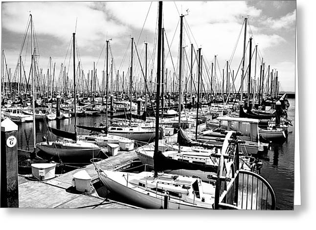 Marina In Black And White Greeting Card by Sean Gillespie