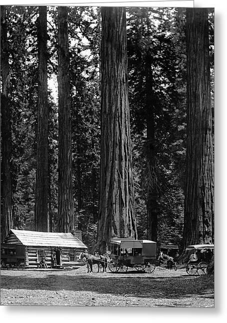 Mariposa Grove Yosemite  1901 Greeting Card by Daniel Hagerman