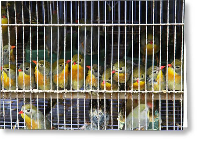 Market Finches Greeting Card