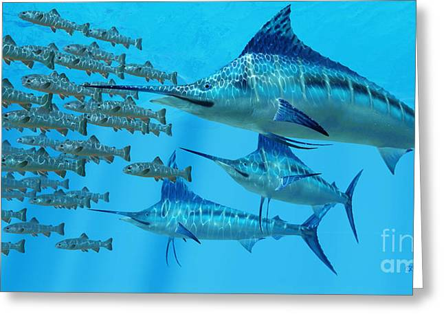 Marlin After A Fish School Greeting Card by Corey Ford