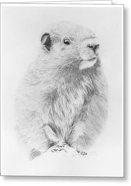 Marmot Greeting Card by Glen Frear