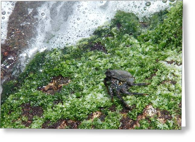 Marnie - Exotic Rock Crab Greeting Card by Robert Schaelike