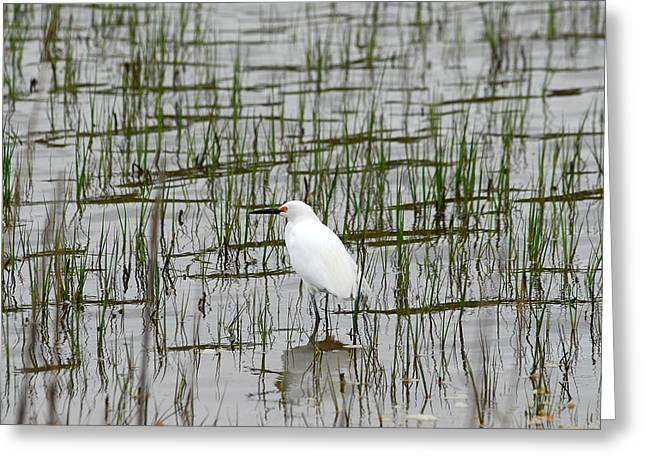 Marsh Bird 1 Greeting Card