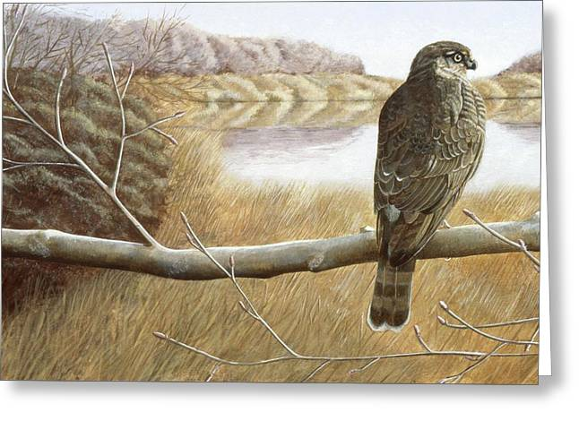 Greeting Card featuring the painting Marsh Hawk by Laurie Stewart