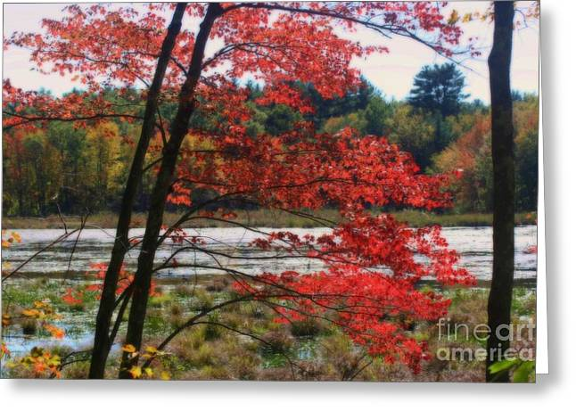 Marsh In Autumn Greeting Card
