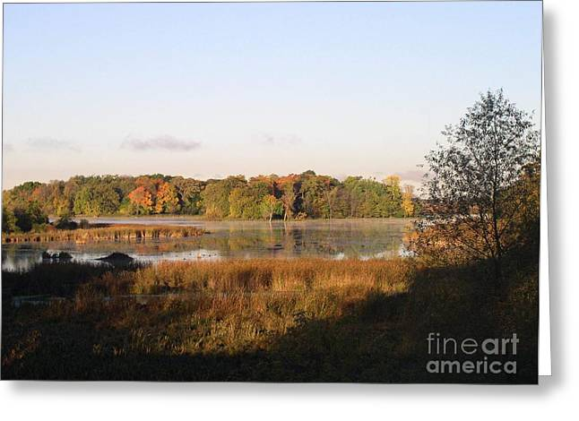 Marsh Morning Greeting Card by Mendy Pedersen
