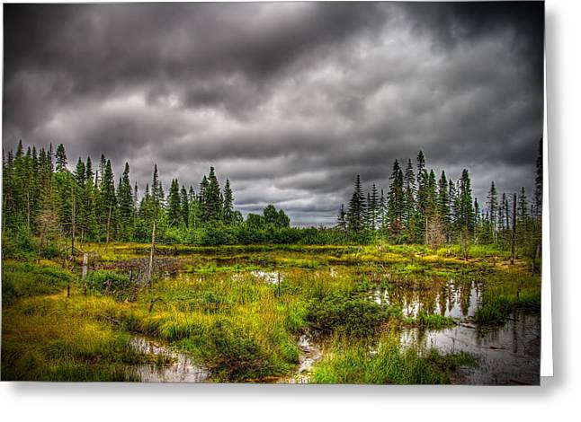 Marsh Near The Lake Greeting Card by Michel Filion