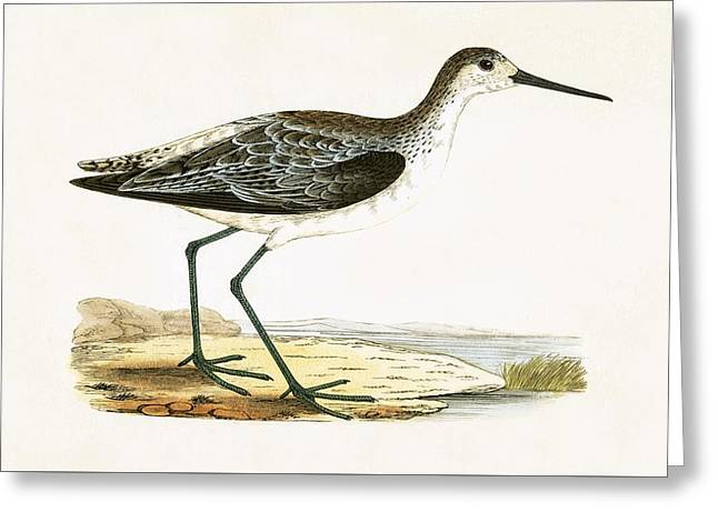 Marsh Sandpiper Greeting Card