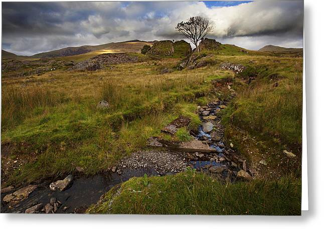 Greeting Card featuring the photograph Marshland At Rhyd Ddu, Wales by Richard Wiggins