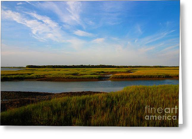 Marshland Charleston South Carolina Greeting Card