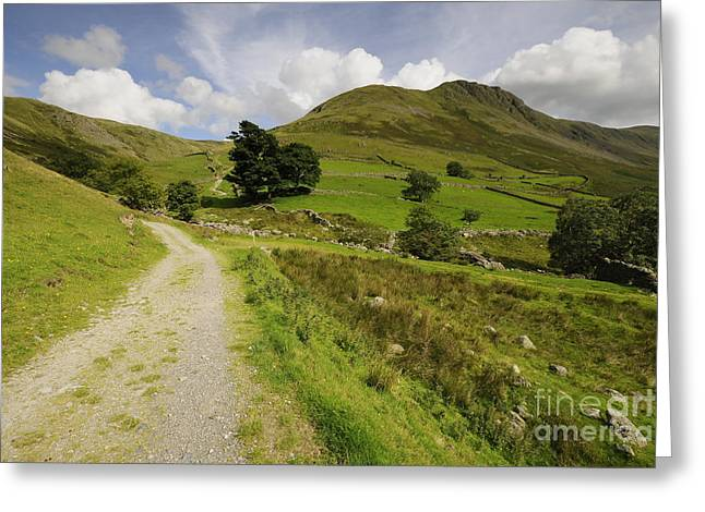 Martindale Common Greeting Card by Nichola Denny