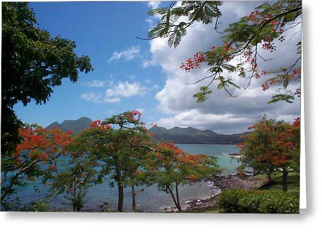 Greeting Card featuring the photograph Martinique by Mary-Lee Sanders
