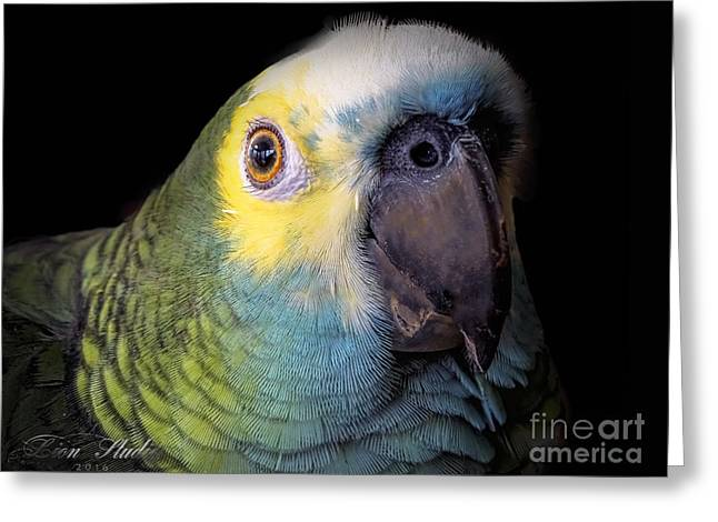 Marty The Blue Front Amazon Greeting Card by Melissa Messick