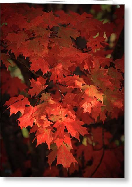Mary Maple Fall Leaf Art Greeting Card by Reid Callaway