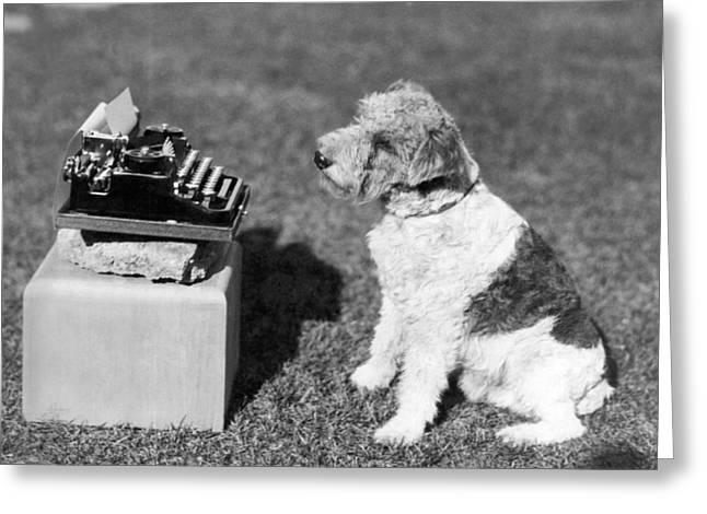 Mary Pickford's Dog, zorro Greeting Card