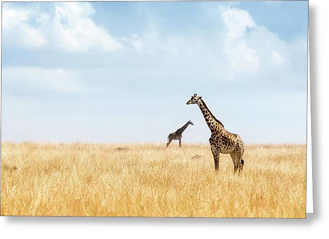 Masai Giraffe In Kenya Plains Greeting Card