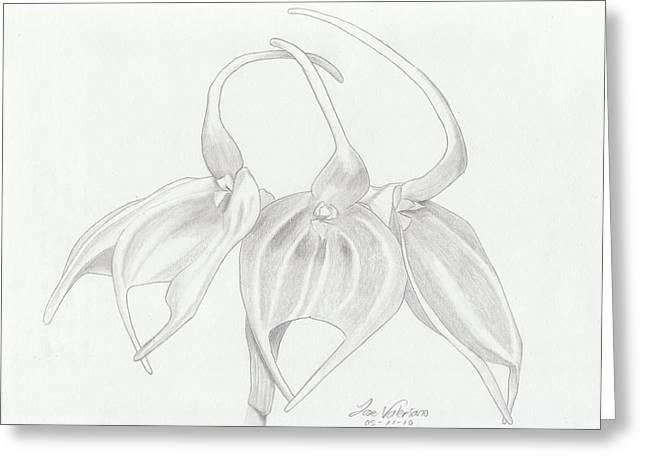 Masdevalia Tovarensis Orchid Greeting Card