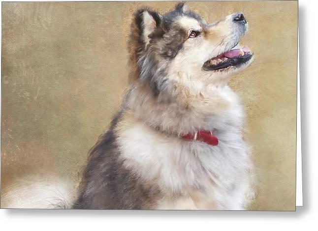 Master Of The Domain II Greeting Card by Colleen Taylor