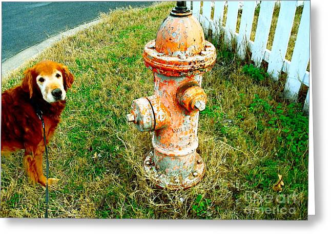 Matching Dog And Fire Hydrant Greeting Card by Chuck Taylor