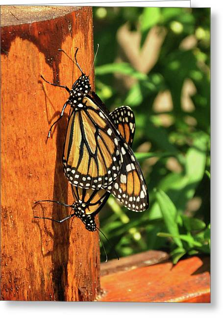 Mating On A Post Greeting Card by Lana Raffensperger