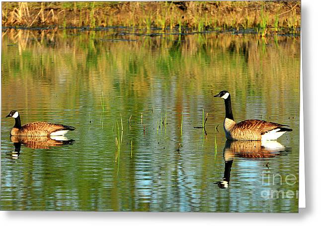 Mating Pair Greeting Card by Dennis Hammer