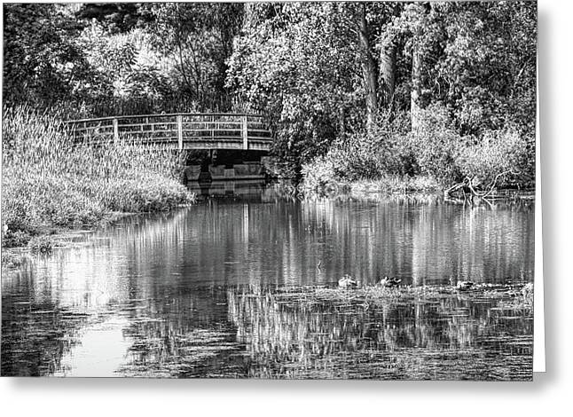 Matthaei Botanical Gardens Black And White Greeting Card by Pat Cook