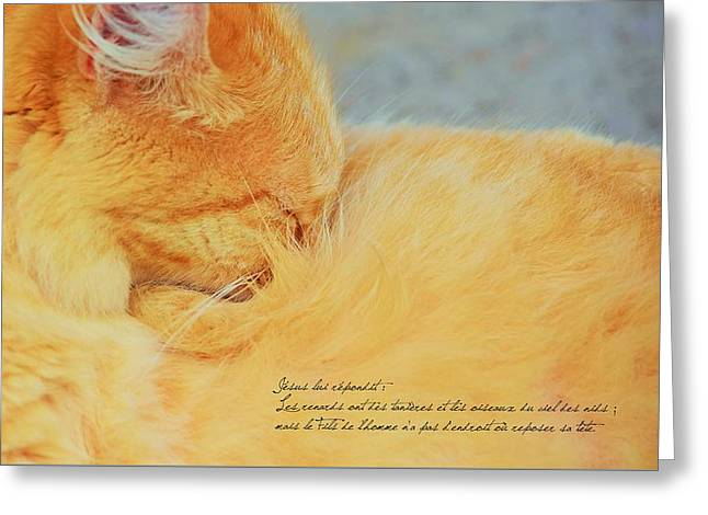 Matthieu 8 20 Greeting Card