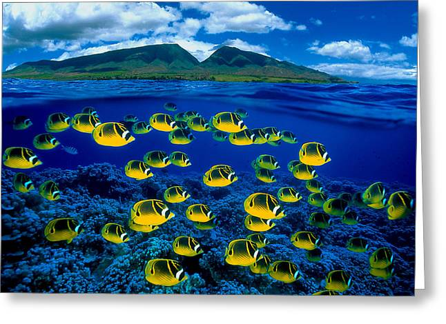 Island Life Greeting Cards - Maui Butterflyfish Greeting Card by Dave Fleetham - Printscapes