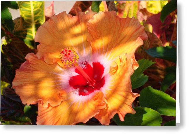 Maui Hybiscus  Greeting Card