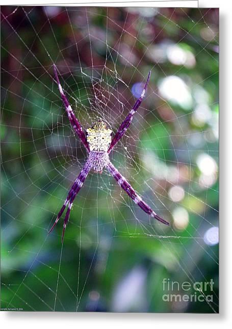 Maui Orbweaver/garden Spider Greeting Card
