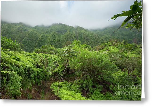 Maunawili Demonstration Trail Greeting Card