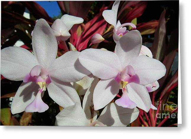 Mauve Ground Orchid Greeting Card