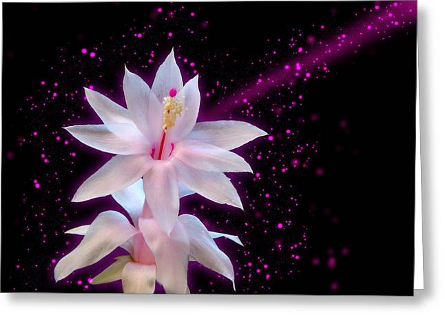 May Flower - Hit By Stars Greeting Card by Carlos Vieira