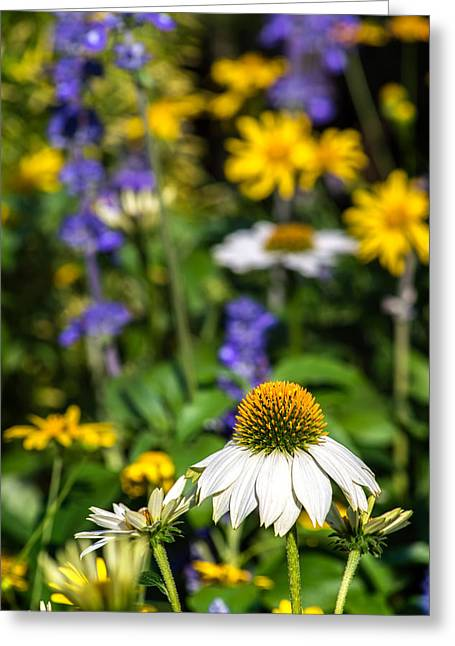 Greeting Card featuring the photograph May Flowers by Steven Sparks
