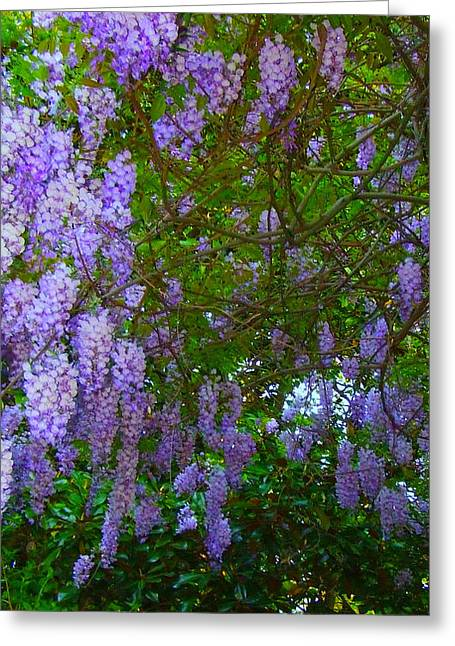 May Wisteria At Duke Gardens Greeting Card