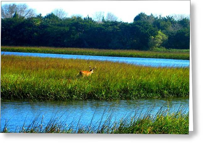 Mayport Jetty Buck 2 Greeting Card by Deb Campbell