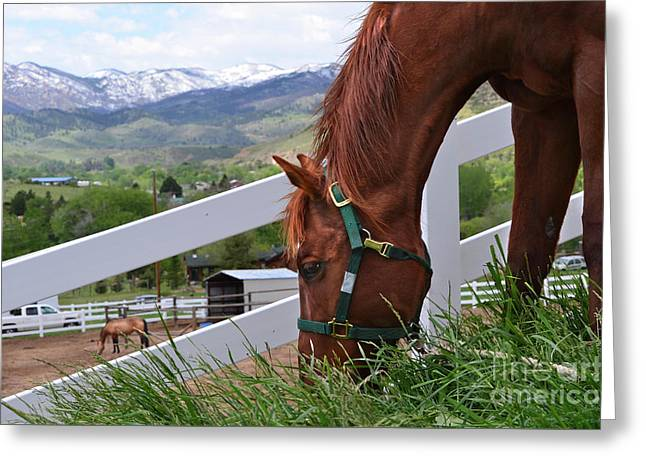 Mccool Grazing Greeting Card