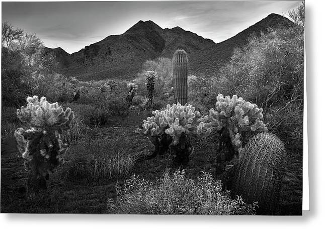 Greeting Card featuring the photograph Mcdowell Mountains Black And White by Dave Dilli