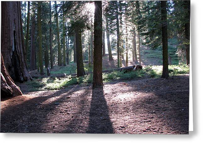 Mckinley Grove Shadows Greeting Card by Chris Gudger