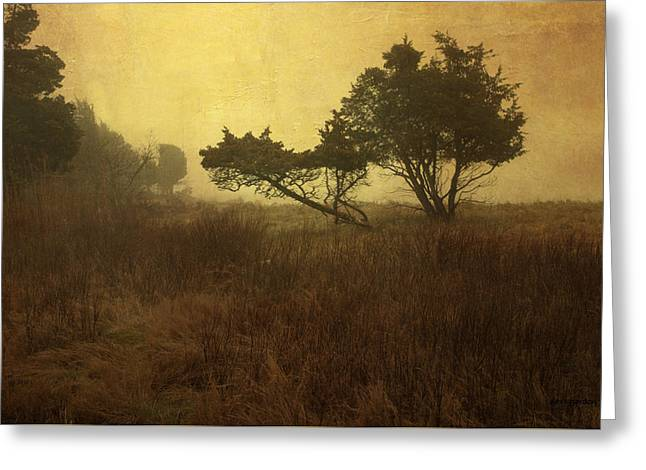 Meadow And Trees Greeting Card by Dave Gordon