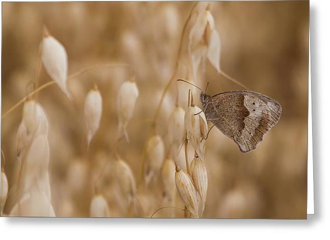 Meadow Brown Roosting Greeting Card