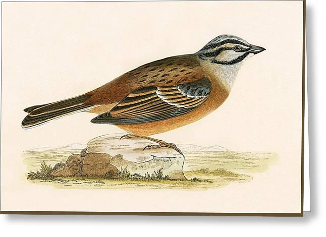 Meadow Bunting Greeting Card by English School