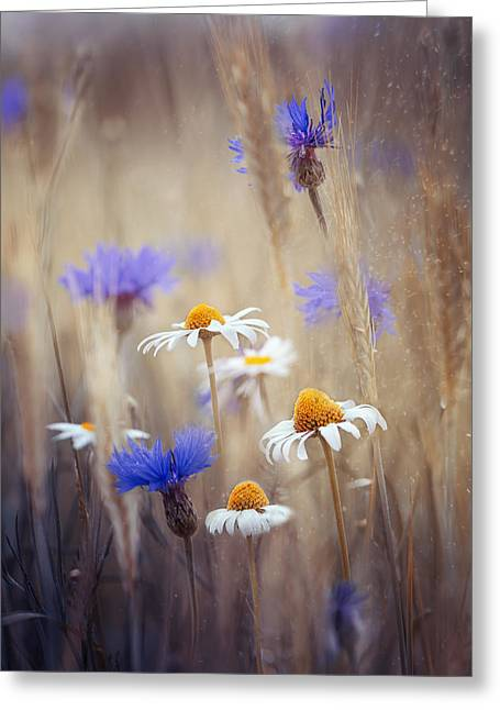 Meadow Flowers Greeting Card by Magda Bognar