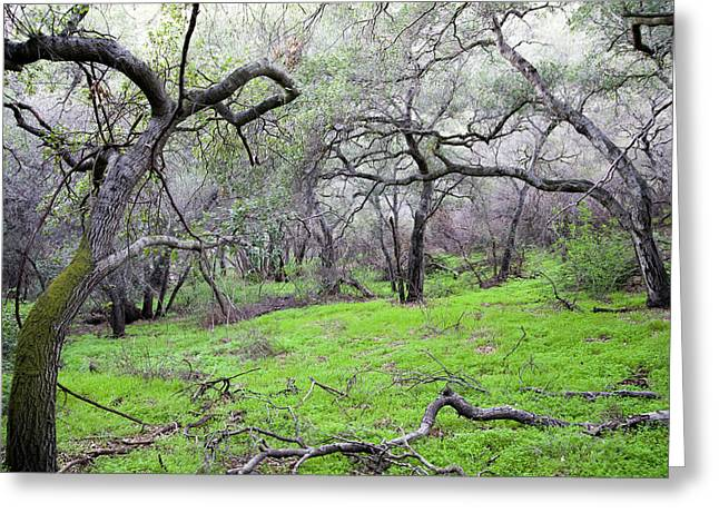 Foothill Greeting Cards - Meadow Greeting Card by Gilbert Artiaga