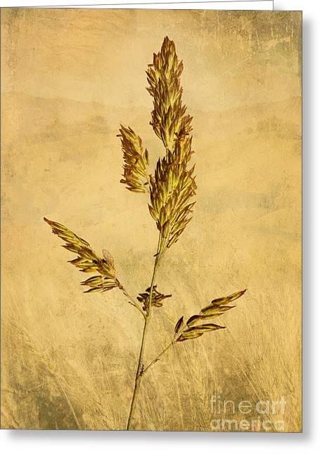 Meadow Grass Greeting Card by John Edwards