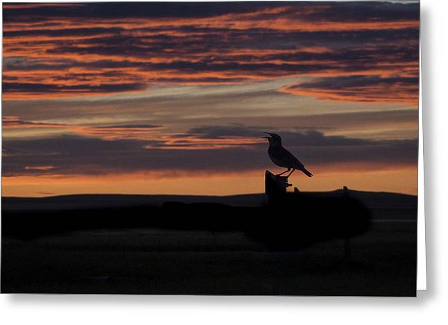 Meadow Lark's Salute To The Sunset Greeting Card