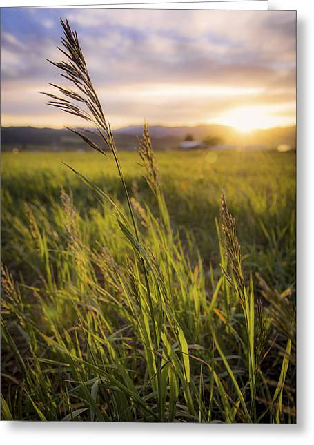 Meadow Light Greeting Card