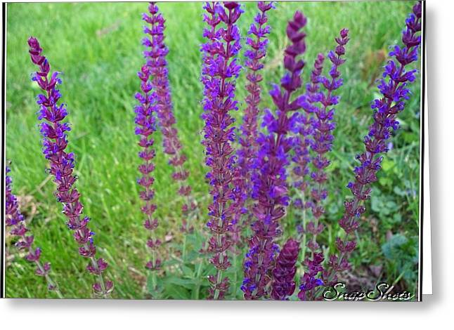 Meadow Sage Greeting Card by Emily Kelley