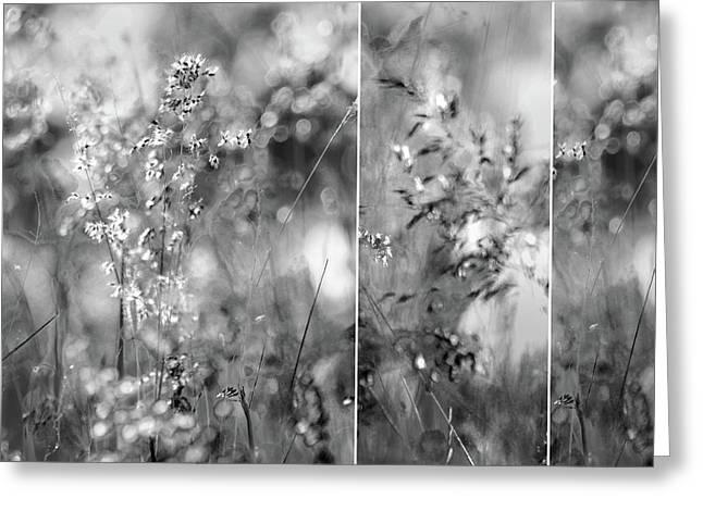 Meadowgrasses Greeting Card